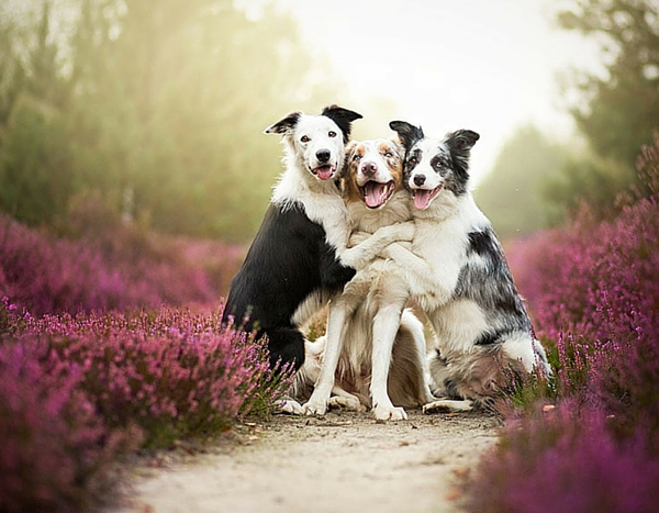dogs_photo