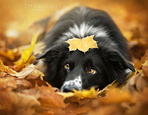 dogs_photo5