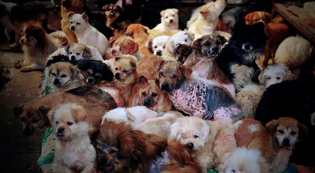 dog-meat-ban-yulin-festival-china