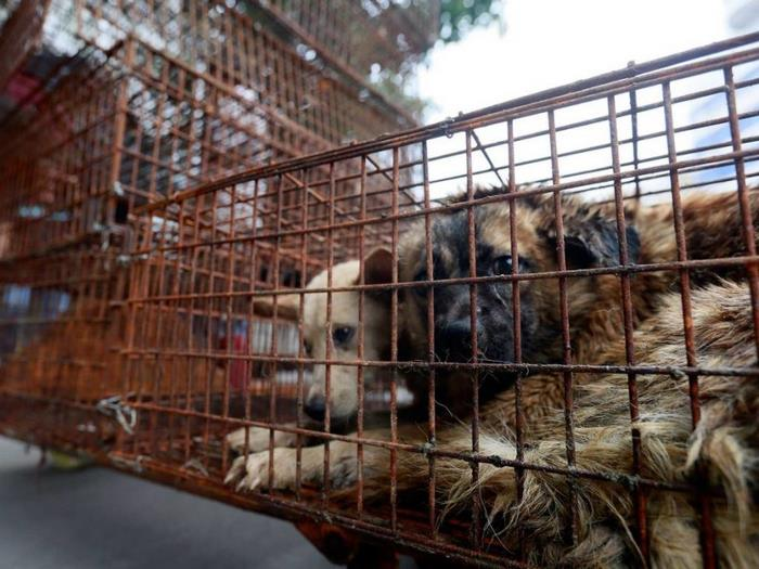dog-meat-ban-yulin-festival-china-2