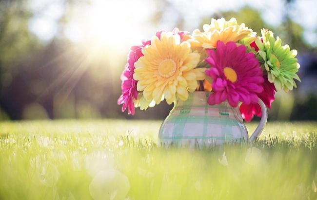 flowers_in_pitcher_796516_960_720_650x410