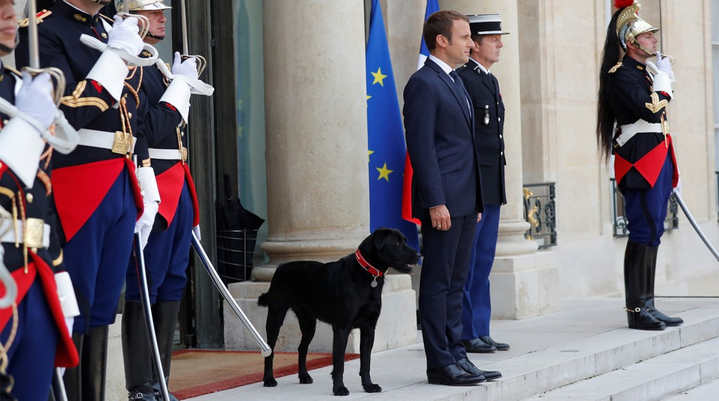 French President Emmanuel Macron stands next to his dog, a labrador crossed griffon named Nemo, as he waits for a guest at the Elysee Palace in Paris, France, August 28, 2017.  REUTERS/Charles Platiau - RTX3DOY0