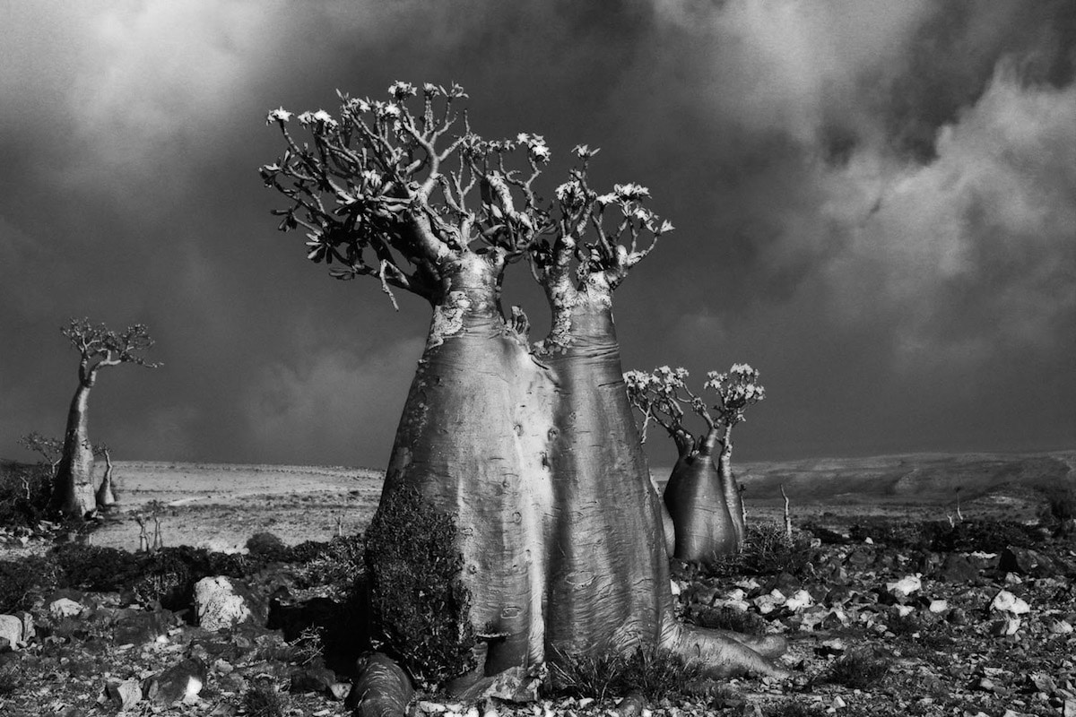 beth-moon-ancient-trees-14_0