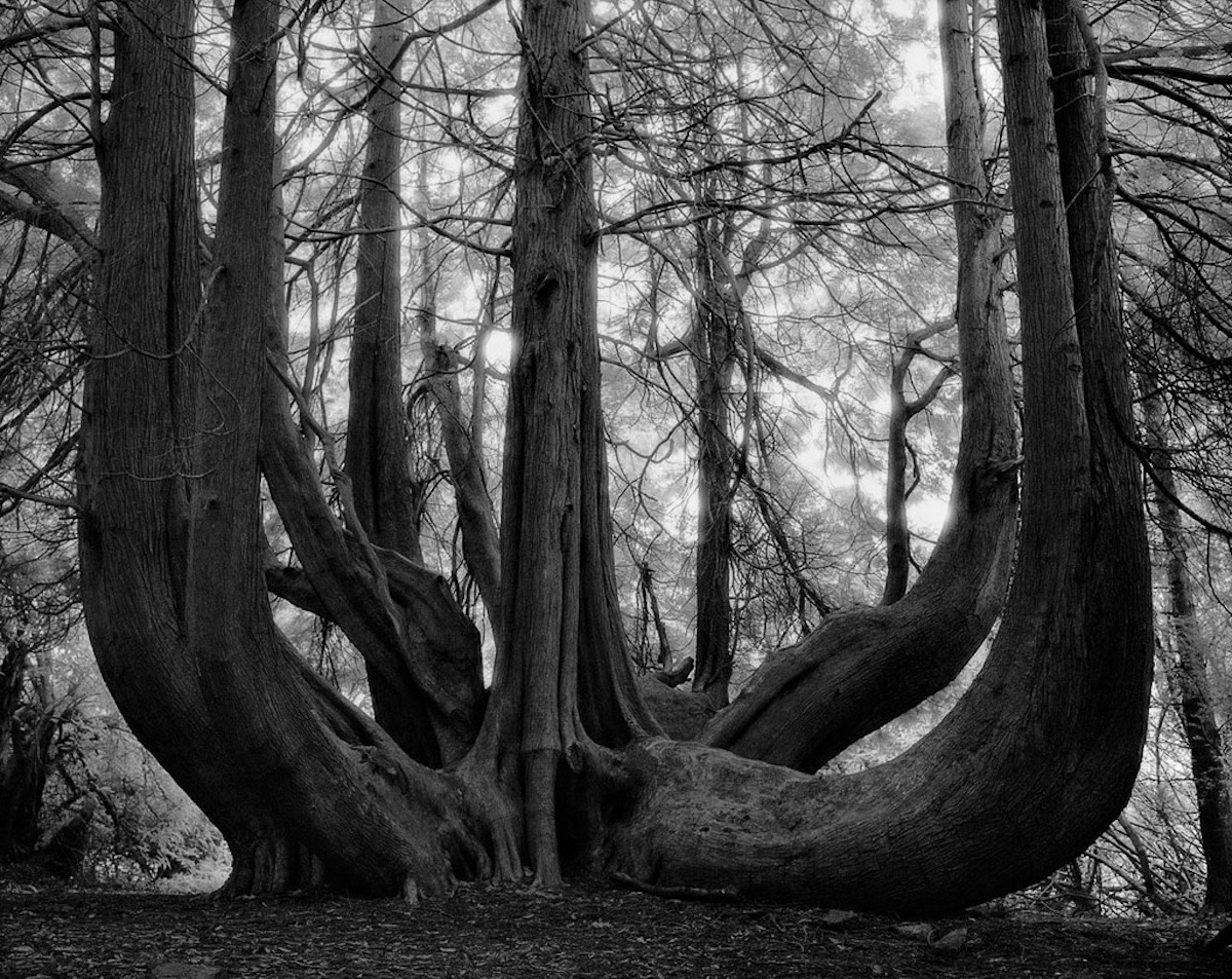 beth-moon-ancient-trees-15_1