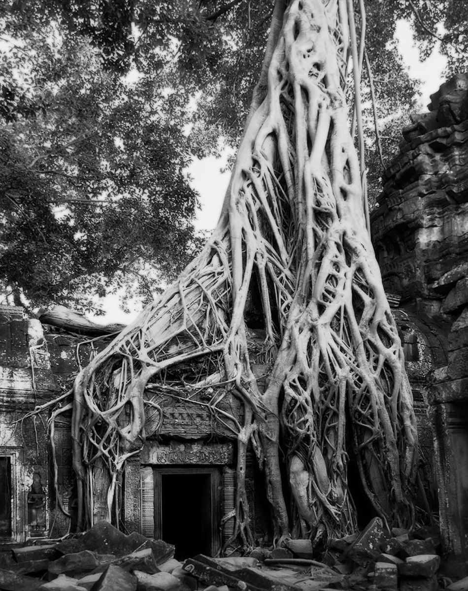 beth-moon-ancient-trees-16_2