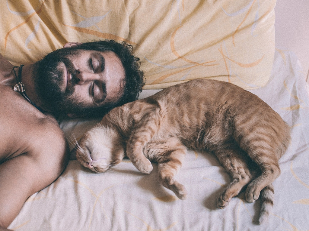 Cats_Men_Beard_Sleep_463705